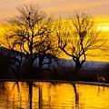 Reflective Pool At Eden by Daniel Dean