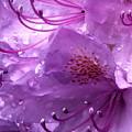 Refreshing Rain Close Up by Helene Fallstrom