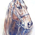 Regal  A Cavalry Horse Portrait by Barbara Widmann