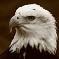 Regal  Eagle by Bruce J Robinson