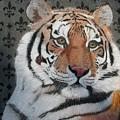 Regal Tiger by Lori Hanks