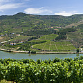 Regua Vineyards by Mikehoward Photography