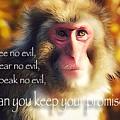 Regulation Of A Monkey by Yutaka Mori
