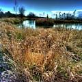 Reifel In Winter 3 by Lawrence Christopher