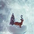 Reindeer In Glass Snow Globe  by Amanda Elwell