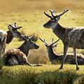 Reindeers  by Jaroslaw Blaminsky