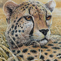 Relaxed Moment - Cheetah by Christopher Cox