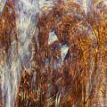 Release by Linda Sannuti
