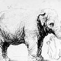 Rembrandt: Elephant, 1637 by Granger