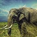 Remember Elephant by Rasmus Sorensen