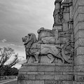 Remembrance Lions by Ross Henton