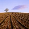 Remote Tree In A Ploughed Field by Bernard Jaubert