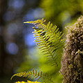 Renewal Ferns by Mike Reid