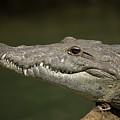 Reptile by Chico Sanchez