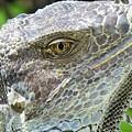 Reptilian by Carlos Amaro