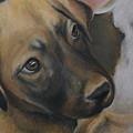 Rescue Pup by Catt Kyriacou