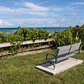 Reserved For A Visitor To East Coast Florida by Allan  Hughes