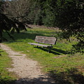 Rest Along The Path by Richard Thomas