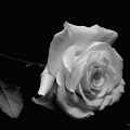 Rest In Peace by Donna Blackhall