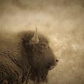 Resting Buffalo by Patrick  Flynn