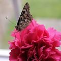 Resting Butterfly by Myrna Migala