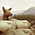 Resting Deer by Zena Zero