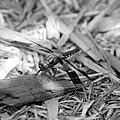 Resting Dragonfly by Katherine Nutt