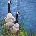 Resting Geese by SueEllen Cowan