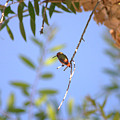 Resting Hummingbird by Brad Scott