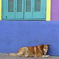 Resting In Boca by PJ Boylan