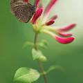 Resting On The Pink Plant by Jaroslaw Blaminsky