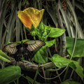 Resting One's Wings by Elaine Malott