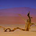 Resting Place Of A Dead Tree by Douglas Barnard