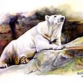 Resting Polar Bear by Liz Viztes