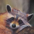 Resting Raccoon by Anne Cowell