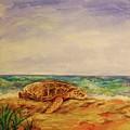 Resting Sea Turtle by Danielle Hacker