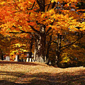 Resting Under Maples by Rachel Cohen