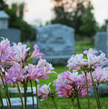 Resurrection Lilies In The Cemetery by Karen Adams