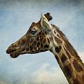 Reticulated Giraffe Head by Liz Leyden