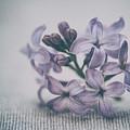 Retro Lilac Flower by Alenka Krek
