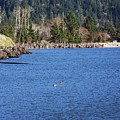 Return To The Bay by Julie Rauscher