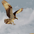Returning To The Nest 01 by Robert Hayes