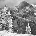 Revelstoke Snow Ghosts Black And White by Adam Jewell
