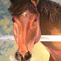 Reverie - Quarter Horse by Susan A Becker