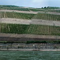 Rhine Valley Vineyards Panorama by Thomas Marchessault