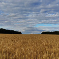 Rhineland-palatinate by Stephen Settles
