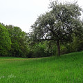 Rhineland-palatinate Summer Meadow by Stephen Settles