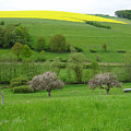 Rhineland-palatinate Summer Meadow With Cherry Trees by Stephen Settles