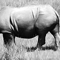 Rhino In The Grasses by Alice Gipson