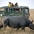 Rhino Inn Tanzania by Carl Purcell
